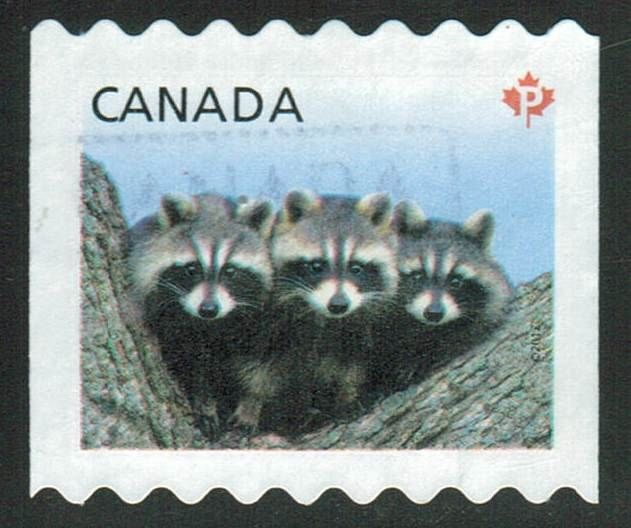 Canada Scott #2506  Baby Wildlife    Racoon   Animals on stamps mammals    stamp collecting  topical stamp collecting  beginners stamp collecting    north american wildlife