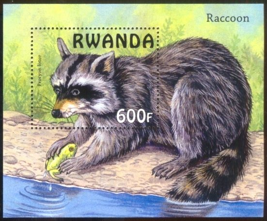 Raccoon  -  Wild Animals - Animals on Stamps - Collecting postage stamps- stamp collecting  -    Procyon lotor   -  Raccoons on stamps  - wildlife on stamps - topical stamp collecting - animals -     Rwanda  - Rwand stamp