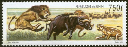 Animals on Stamps Mammals on Stamps  Africa Benin 750 francs 2001 lion and prey  African Cape Buffalo  African Wildlife African Wild Animals African Mammals Stamp Collection Worldwide Stamp Collecting Topical Stamp Collecting