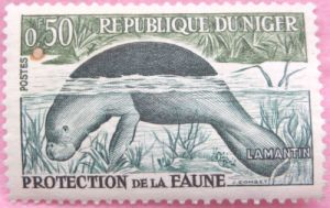 Animals on stamps mammals on stamps  Manatee Trichechus senegalensis Stamp 1962 Animal Protection Niger stamps African wild animals on stamps endangered animals on stamps wildlife conservation African wildlife dugong Sirenia Trichechidae manatees on stamps endangered species on stamps collecting animals on stamps worldwide stamp collection stamp collections for sale African Stamp Collection African Wild Animals mammalia mammalogist Trichechus dugongs on stamps African Manatee central American mammals South American mammals European mammals Indian mammals marine mammals Latin American mammals stamps are fun collecting topical stamps thematic stamps  thematic stamp collecting wildlife stamps antelopes on stamps cats on stamps mammal stamp collecting
