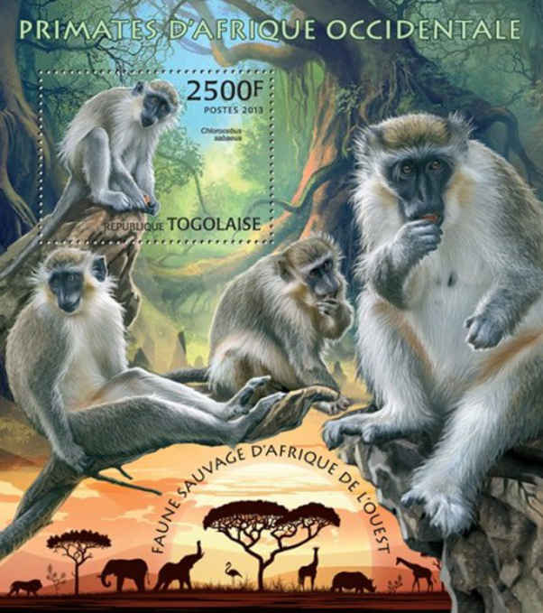 Animals on stamps mammals on stamps Primates on Stamps Monkeys on stamps Apes on stamps African Animals on Stamps Africa Togo Primates Souvenir Sheet  2013 Wildlife on Stamps topical stamp collecting endangered animals on stamps  collecting monkeys on stamps postage stamp collection topical stamp collection worldwide stamp collection stamp collections for sale wildlife conservation wild animals on postage stamps primate research primate intelligence  Africian Primates  great apes gorillas on stamps mammalia  green monkey Chlorocebus sabaeus Callithrix monkey Sabaeus monkey Old World monkey green monkey on stamps Chlorocebus Cercopithecidae  baboon vervet monkey Chlorocebus pygerythrus  Papio Anubis stamp collecting for fun baboons on stamps collecting stamps from Togo exotic animals on stamps