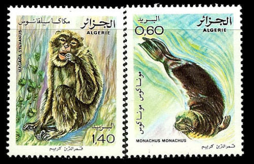 animals on stamps birds on stamps algeria  wildlife stamps African Stamps Algerian Stamps animals of African Stamps African Animals African Wildlife Africa thematic stamp collection ALGERIA Monk Seal Mediterranean Monk Seals (Monachus monachus) and Barbary macaque (Macaca sylvanus) Macaque 1981 Scott 672-673 MNH