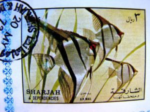 angelfish stamp sharjah tropical fishes fish on stamps cichlids freashwater fish postage stamps