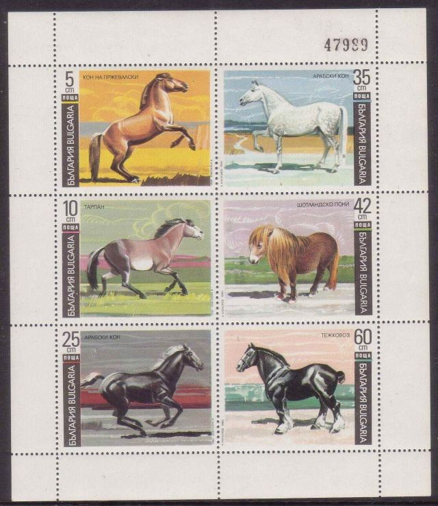 BULGARIA 1981 HORSE horses on stamps  animals on stamps wildlife stamps topical stamp collecting thematic stamp collector  collecting postage stamps as a hobby horse breeds types of horses stamp collector of fauna wild animals on stamps wildlife on stamps mammals on stamps postage stamps of the world