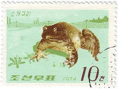 Rana catesbeiana  1974 North Korean Stamp   korea    wildlife of korea wildlife of the world wildlife on stamps frog stamp frogs on stamps postage stamps topical stamp collecting thematic stamp collection frogs on postage stamps  animals on stamps wildlife stamps wild animal stamps fauna stamps  frogs and other animals on postage stamps