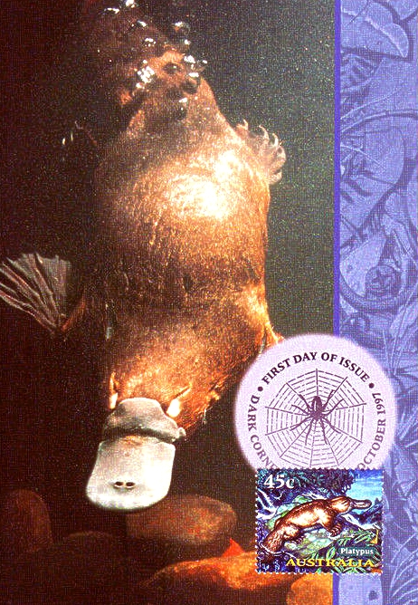 USTRALIA - 1997 CREATURES OF THE NIGHT  -  MAXI CARD  Duck-billed Platypus  Ornithorhynchus anatinus  zoological stamps  animals on stamps wildlife stamps Australian postage stamps topical stamp collection thematic stamp collecting mammals on stamps fauna on stamps philatelist  philatelic collection  philatelic collector stamp collecting for beginners Australian wildlife Australian fauna Australia topical stamp collecting