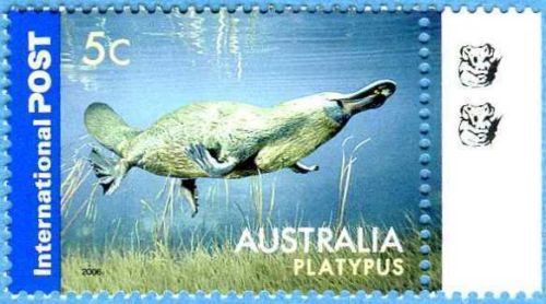 Australia 2006 Platypus 5c International Postage Stamp  Ornithorhynchus anatinus  zoological stamps  animals on stamps wildlife stamps Australian postage stamps topical stamp collection thematic stamp collecting mammals on stamps fauna on stamps philatelist  philatelic collection  philatelic collector stamp collecting for beginners Australian wildlife Australian fauna Australia topical stamp collecting