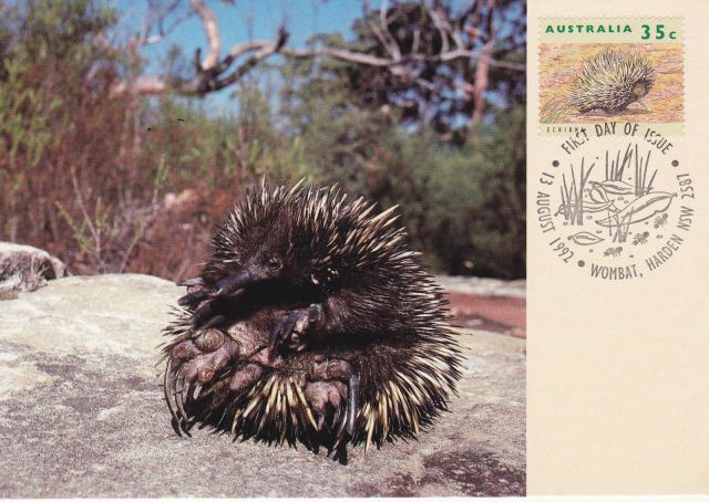 Australia MAXI CARD 1992 ECHIDNA  Short-beaked echidna Tachyglossus aculeatus    animal stamp wildlife stamp topical stamp collecting thematic stamp collecting Australian wildlife postage stamps  spiny anteater collecting postage stamps  Australian spiny anteater  echidna