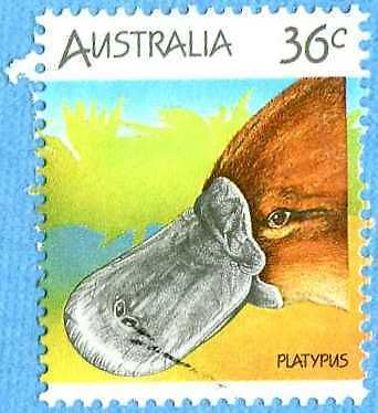 Australian 1986 36c Platypus Stamp   Ornithorhynchus anatinus  zoological stamps  animals on stamps wildlife stamps Australian postage stamps topical stamp collection thematic stamp collecting mammals on stamps fauna on stamps philatelist  philatelic collection  philatelic collector stamp collecting for beginners Australian wildlife Australian fauna Australia topical stamp collecting