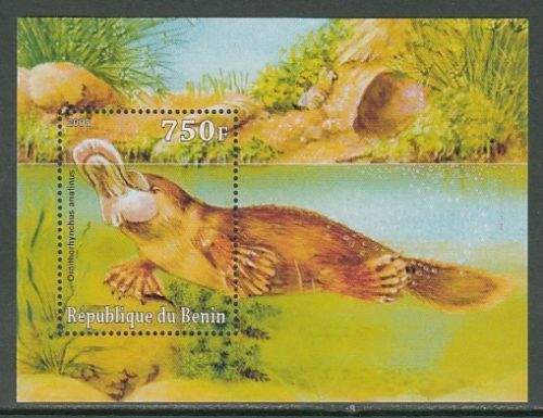 Benin - Platypus - Wild Animals - SS stamp  Ornithorhynchus anatinus  zoological stamps  animals on stamps wildlife stamps Australian postage stamps topical stamp collection thematic stamp collecting mammals on stamps fauna on stamps philatelist  philatelic collection  philatelic collector stamp collecting for beginners Australian wildlife Australian fauna Australia topical stamp collecting