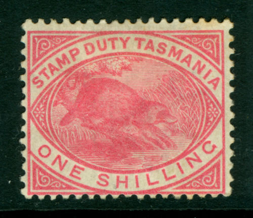 TASMANIA Scott# AR27 1880 Stamp duty  PLATYPUS   Duck-billed platypus   Ornithorhynchus anatinus    zoological stamps  animals on stamps wildlife stamps Australian postage stamps topical stamp collection thematic stamp collecting mammals on stamps fauna on stamps philatelist  philatelic collection  philatelic collector stamp collecting for beginners Australian wildlife Australian fauna Australia topical stamp collecting